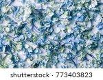 dry blue hydrangea flower... | Shutterstock . vector #773403823