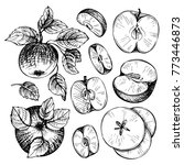 sketches and engravings apples  ... | Shutterstock . vector #773446873