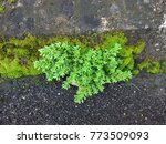Moss At The Roadside After The...