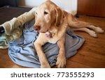 Old Dog On An Old Blanket
