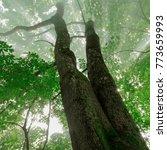 sun rays spectacular forest...   Shutterstock . vector #773659993