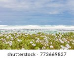 White Flowers At The Beach ...