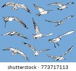 seagulls in flight | Shutterstock .eps vector #773717113