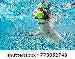 playful jack russell terrier... | Shutterstock . vector #773852743