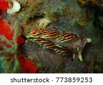 nudibranch. berghia...   Shutterstock . vector #773859253