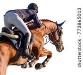 equestrian sports  horse...   Shutterstock . vector #773865013