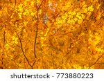 looking up at the tree canopy... | Shutterstock . vector #773880223