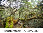 amazing tropical forest with... | Shutterstock . vector #773897887
