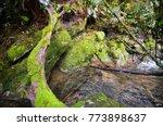 amazing water stream and... | Shutterstock . vector #773898637