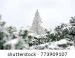 a snow coniferous tree ... | Shutterstock . vector #773909107