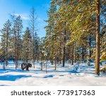 soon christmas. the arctic.... | Shutterstock . vector #773917363