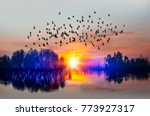 birds silhouettes flying above... | Shutterstock . vector #773927317