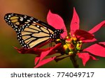 closeup of great monarch... | Shutterstock . vector #774049717