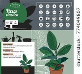 template for indoor plant ficus.... | Shutterstock .eps vector #774049807