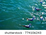 a flock of seagulls on the sea... | Shutterstock . vector #774106243