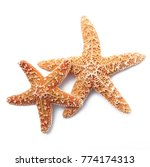 Two starfish on white background