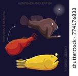 deep sea fish anglerfish set...   Shutterstock .eps vector #774176833