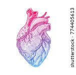 realistic human heart. vintage... | Shutterstock .eps vector #774405613