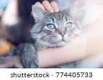 woman at home holding her... | Shutterstock . vector #774405733