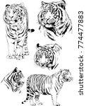 vector drawings sketches... | Shutterstock .eps vector #774477883