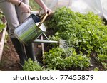 Young Woman Watering Plants In...