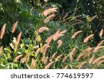 the grass in the middle of the... | Shutterstock . vector #774619597