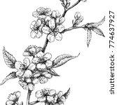 sketch of cherry blossom....   Shutterstock . vector #774637927