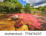 cano cristales  river of five... | Shutterstock . vector #774676237