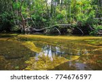 cano cristales  river of five... | Shutterstock . vector #774676597