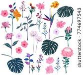 set of  vector  beautiful... | Shutterstock .eps vector #774697543