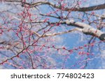 background of blooming pink... | Shutterstock . vector #774802423