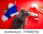 Grey Tabby Cat Choosing A...