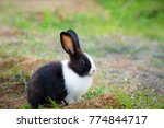 black and white hair bunny in... | Shutterstock . vector #774844717