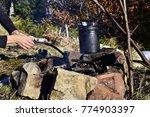 cooking n a pot over campfire... | Shutterstock . vector #774903397