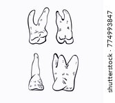teeth vector illustration... | Shutterstock .eps vector #774993847