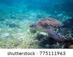 green turtle in seashore of... | Shutterstock . vector #775111963