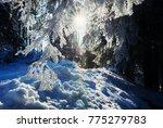 mystic winter forest   bright...   Shutterstock . vector #775279783