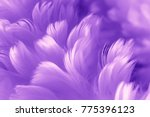 ultra violet feathers closeup   ... | Shutterstock . vector #775396123
