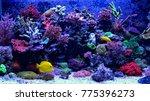 amazing coral reef aquarium... | Shutterstock . vector #775396273