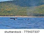 isla isabel a volcanic island... | Shutterstock . vector #775437337