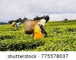 women with woven wicker baskets ... | Shutterstock . vector #775578037