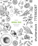 herbal tea shop frame vector... | Shutterstock .eps vector #775583287