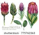 watercolor tropical flower set. | Shutterstock . vector #775762363