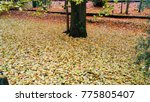 autumn landscape in a rainy day.... | Shutterstock . vector #775805407
