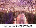 tokyo sakura cherry blossom... | Shutterstock . vector #775872427