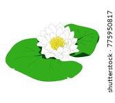 water lily flower  eps 10 file  | Shutterstock .eps vector #775950817