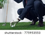cropped shot of businessman in... | Shutterstock . vector #775953553