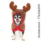 cute chihuahua in a reindeer... | Shutterstock . vector #776166343