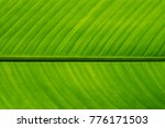 Small photo of close up big leaf is light green color type monocots. soft focus. free space for texture, background, letter, statement