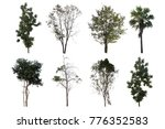 isolated tree set a white... | Shutterstock . vector #776352583